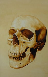 "Image of Limited Edition ""Anatomical Skull"" Print"