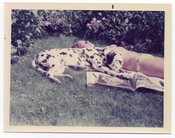 Image of BIKINI GIRL AND DALMATIAN DOG SUNBATHING VINTAGE COLOR SNAPSHOT PHOTO