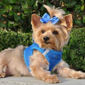 Image of American River Ultra Choke-Free Mesh Dog Harness - Royal Blue