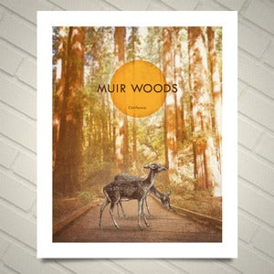 Image of Muir Woods