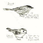 Image of Bird Watching Print - Dunnock & Goldcrest