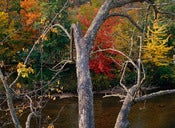 "Image of Photograph, 'Adirondack Afternoon' 2001; ""HUDSON RIVER"" Series"