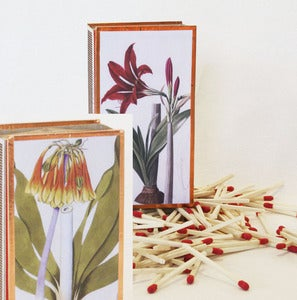 Image of Amaryllis Matchbox Red or Orange