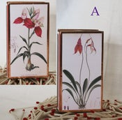 Image of Orchid Matchbox, Pink & Purple