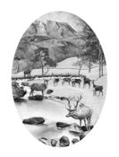 Image of Stags and Hinds