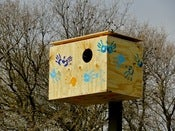 Image of Barn Owl Box Instructions