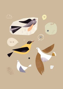 Image of Birds