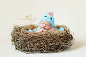 Image of Baby Blue Bird