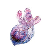 Image of Anatomical Heart Vase