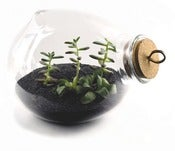 Image of Xtra-Terrarium