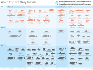 Image of Which Fish are Okay to Eat?