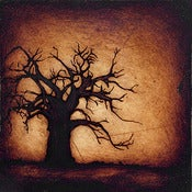 "Image of ""Horizon Tree Baobab 2 Brown"" <br> Sizes: 4x4"", 6x6"", 8x8"", 12x12"""