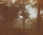Image of photographic print, fog 2, 6x8""
