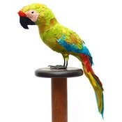 Image of GREAT GREEN MACAW