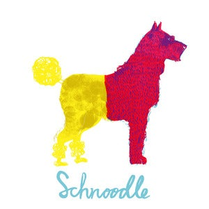 Image of Schnoodle 