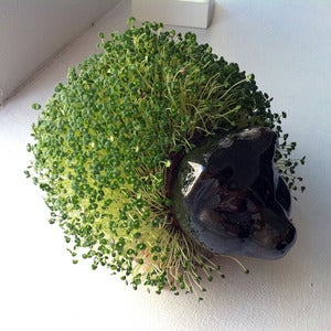 Image of A Chia Pet (pig)