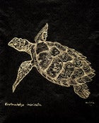 Image of (80.15 W:) Hawksbill Sea Turtle