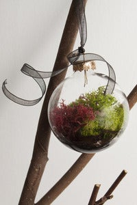 Image of Terrarium Ornament