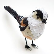 Image of LONG TAILED TIT