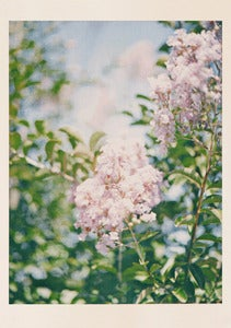 Image of Dawn Press - Pink Flowers2