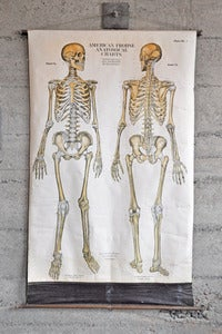 Image of Vintage Anatomy Chart 1918 (Skeleton)