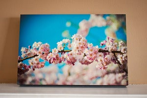 Image of Cherry Blossom 16&quot; x 24&quot; Standout Professionally Printed on Metallic Paper