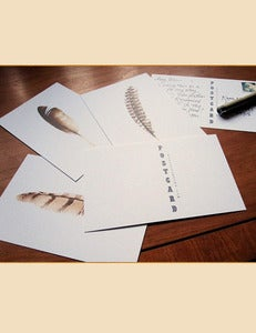 Image of Feather Postcards ~ Set of Twelve