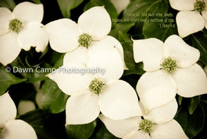 Image of Floral with Verse in 8&quot; x 12&quot; Standout Professionally Printed on Metallic Paper