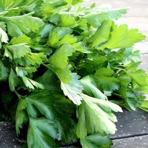 Image of Parsley - Italian