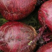Image of Beetroot – Bull's blood