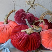 Image of Velvet Plush Pumpkin Spring Set