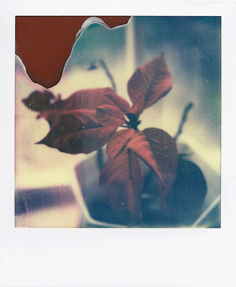Image of True Colours - Polaroid Print