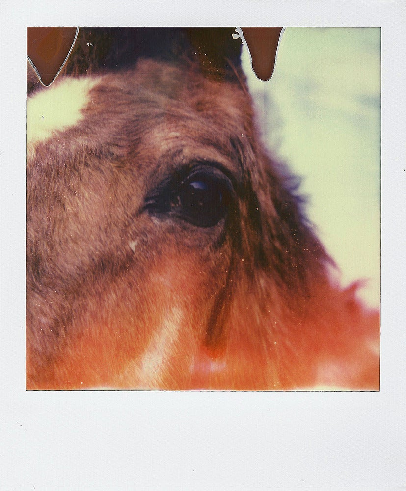 Image of Horsing Around - Polaroid Print