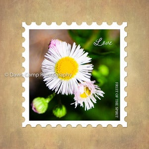 Image of Love 10&quot; x 10&quot; Daisy Stamp Motif Canvas from the Fruit of the Spirit Collection