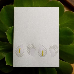 Image of calla drops {white}