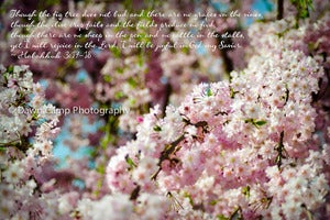 "Image of Cherry Blossoms with Verse on an 8"" x 12"" Standout Professionally Printed on Metallic Paper"