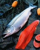 Image of Add On:: fresh Copper River Sockeye Salmon - Whole Side Fillet - sold by each