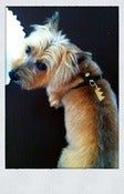 Image of Rossmore. Jewelry Dog Tag