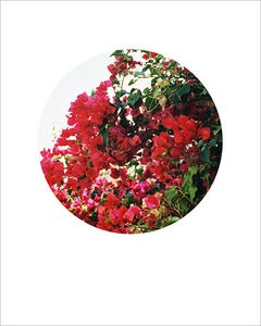 Image of Bougainvillea Circle