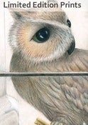 Image of Owl's Secret - Framed or Unframed Print.