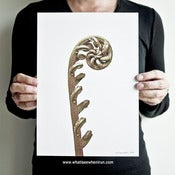 Image of Party Blower - Cyathea Latebrosa
