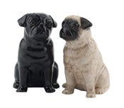 Image of PUG SALT AND PEPPER SET