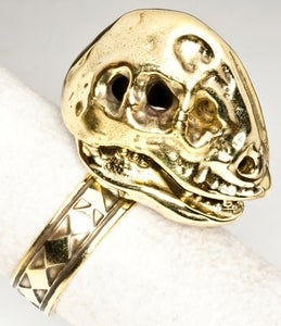 Image of Oviraptorosaur Skull - Brass Ring
