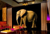 Image of ELEPHANT WALL ART