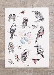 Image of Poster Birds