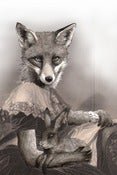 Image of Mrs Spring Fox 11 x 14 print