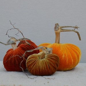 Image of Velvet Plush Pumpkin Harvest Trio