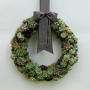 Image of Living Succulent Wreath