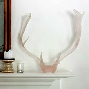 Image of Mule Deer Rack