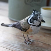 Image of CRESTED TIT